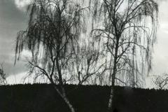 brezy