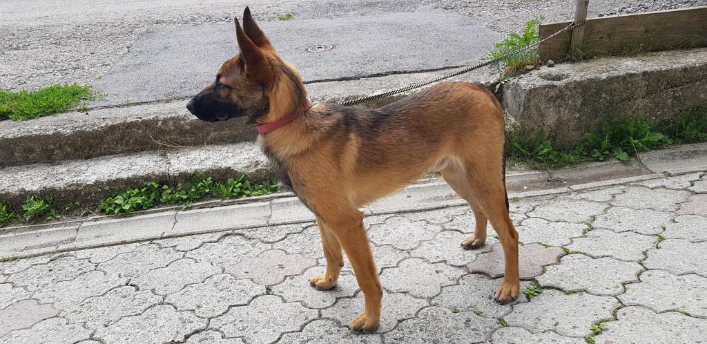 Nájdený pes
